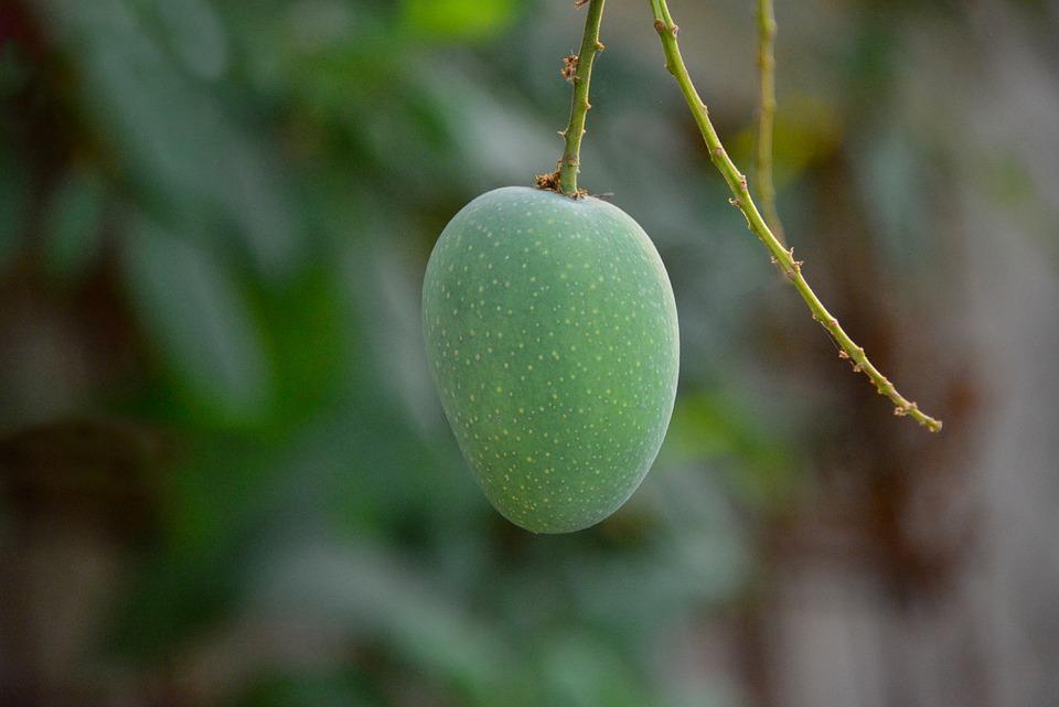 マンゴーと種類の健康上の利点